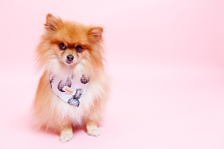 DogPhotos6